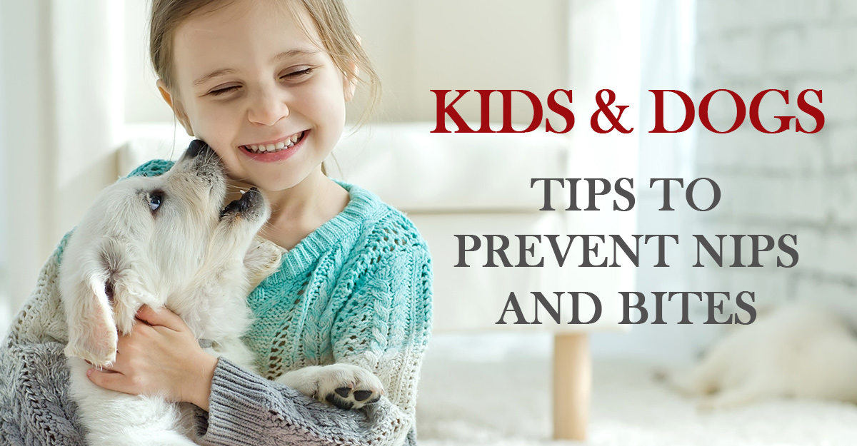 prevent dog bites kids