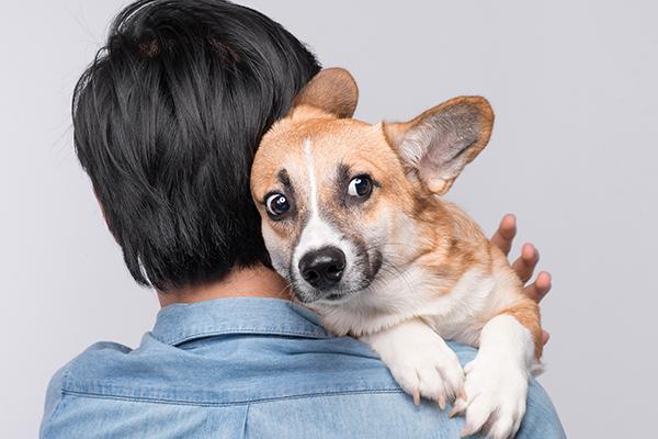 Dog Body Language and Child/Dog Interaction - Whole Dog University